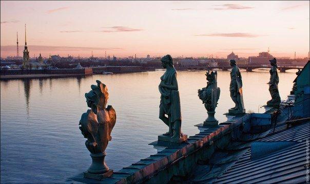 Загадочные обитатели петербургских крыш