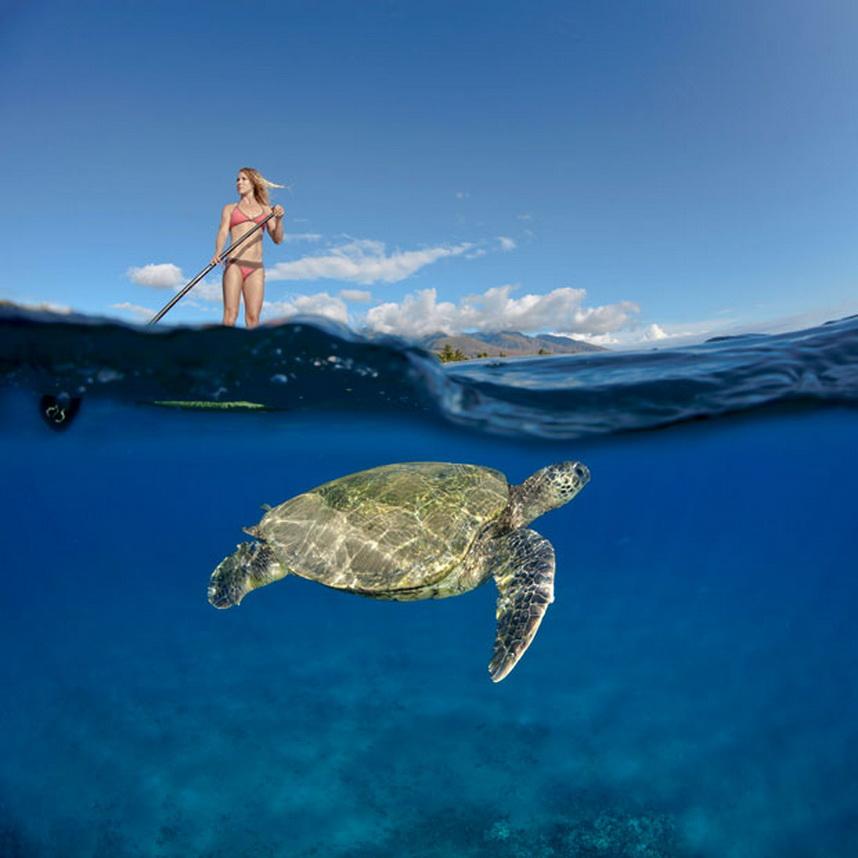 2170 Жизнь в океане   подводные фотографии Дэвида Флитэма