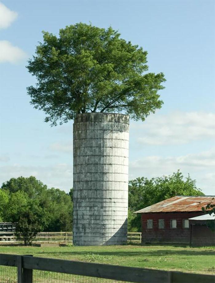 Прямо из силосной башни дерево, живучесть, жизнь, мир, планета, растительность, фото