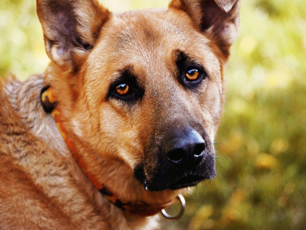 Самые верные друзья: собаки-терапевты лечат детей в Петербурге