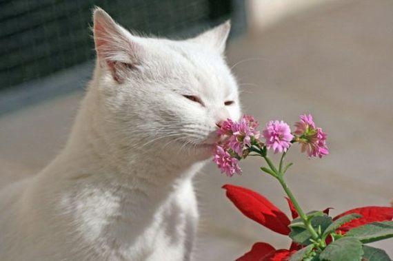 ФИНИКО какие запахи лыбит кошка питания