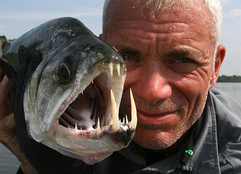 ловля рыбу вампира