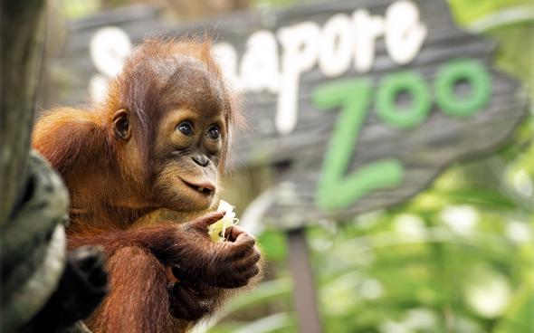 Забавные животные различных видов в подборке позитивных фото