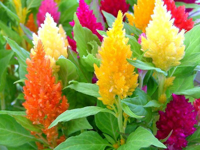 Цветы Своими руками Фото цветов - Part 13