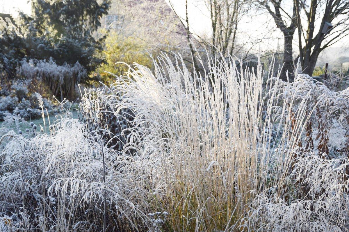 Зимний цветник — многолетники, которые красивы даже зимой