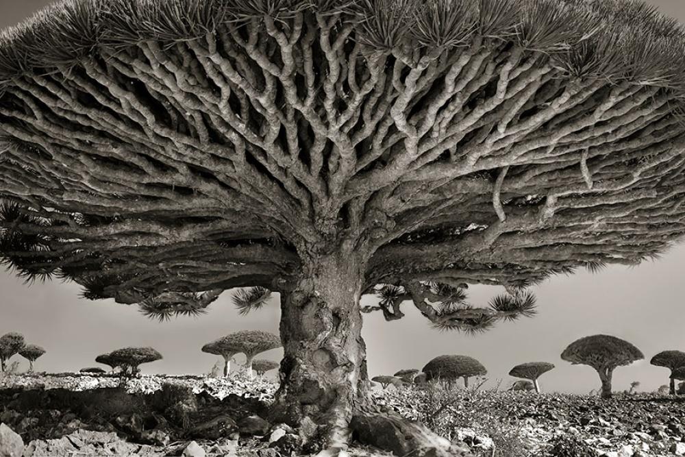 Женщина посвятила жизнь фотографированию самых старых деревьев в мире