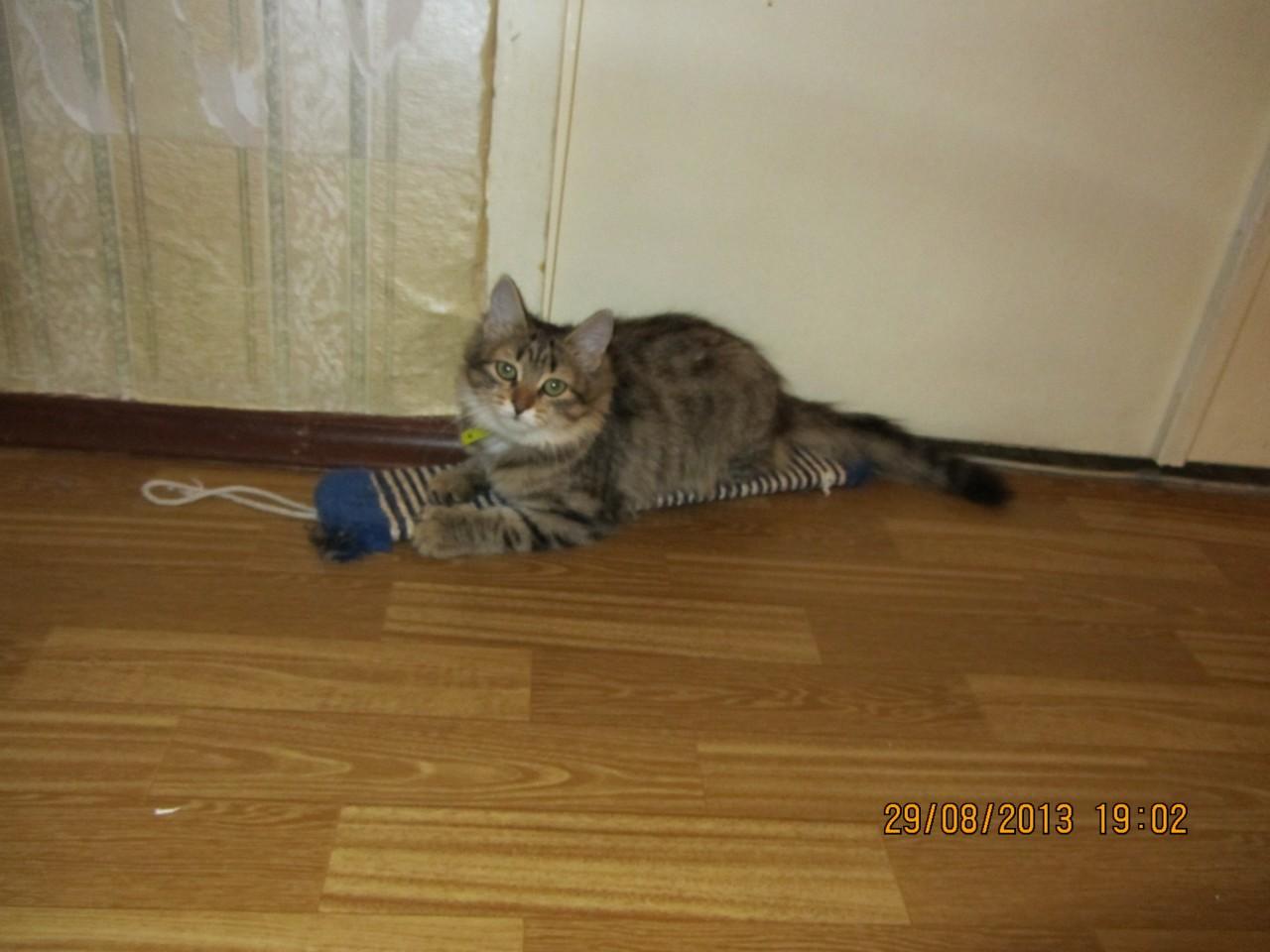 Сирота превращалась в обычного ребенка) коты, кошка