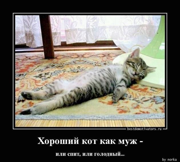 — 300 грамм сыра. — 500 рублей. — Почему так дорого?…