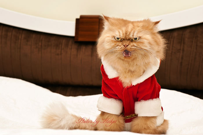 Garfi05 Гарфи, самый сердитый кот в мире