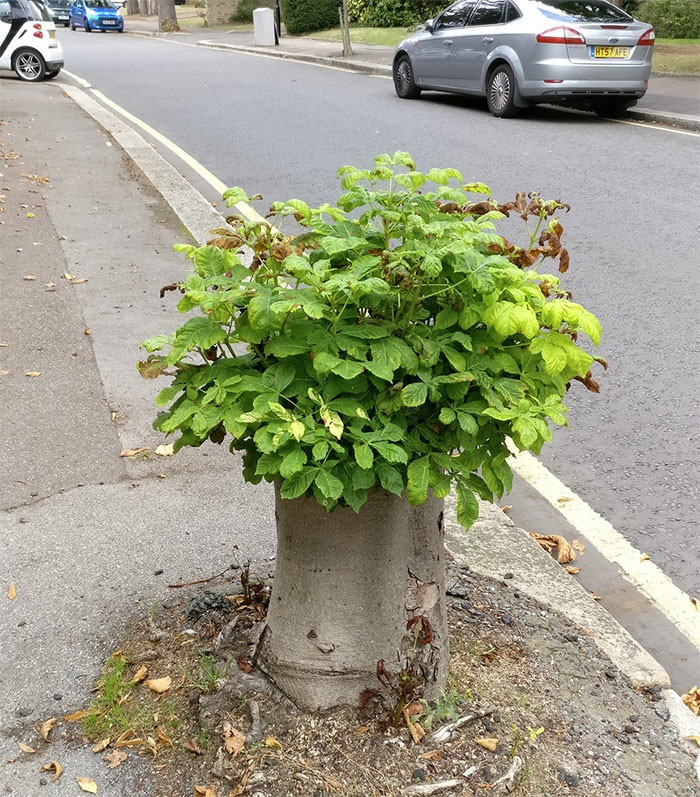 Пенек ожил дерево, живучесть, жизнь, мир, планета, растительность, фото