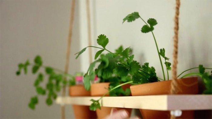 Домашний огородик