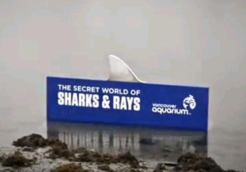 Ради рекламы в городском парке Канаде поселили акулу