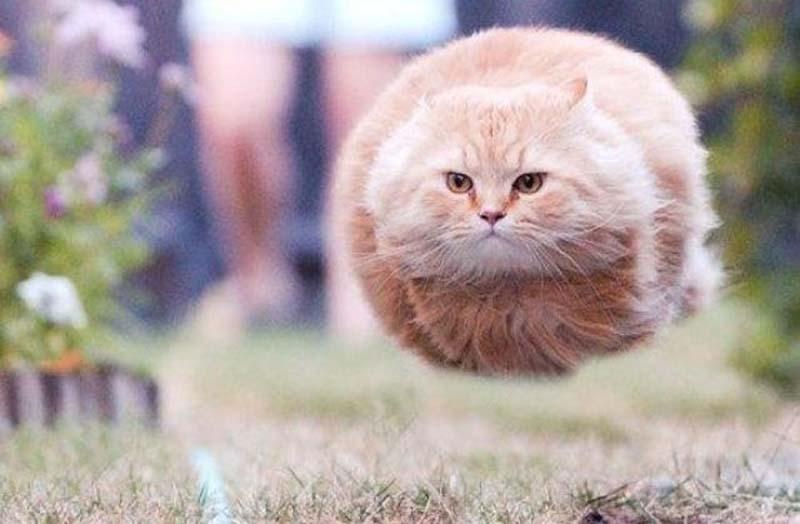 Уникальные фотографии котиков, сделанные в нужный момент