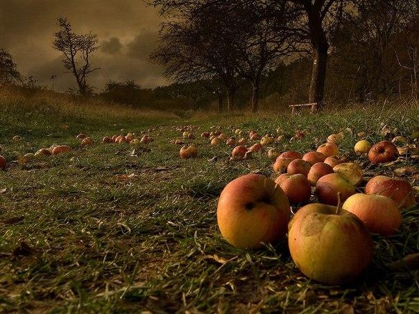 Подлая падалица: как уберечь еще недозревшие фрукты