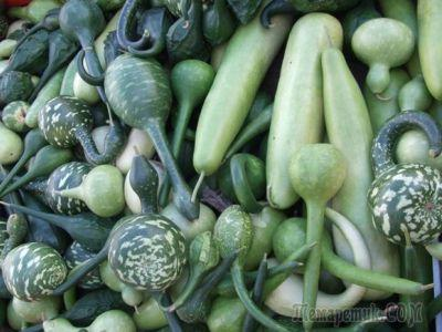 На пороге осени: хоровод овощей с красивыми плодами