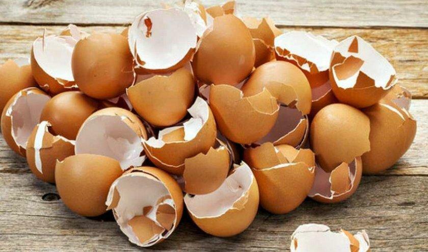 Не выбрасывайте скорлупки от яиц - они могут принести пользу для вашего организма