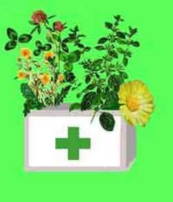 Лекарственные растения в рецептах от атеросклероза