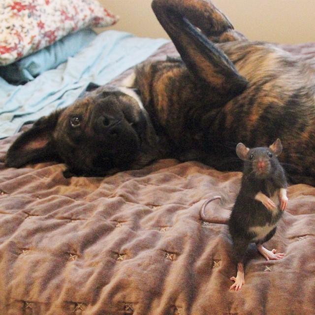 animal-friends-rat-dog-osiris-riff-26