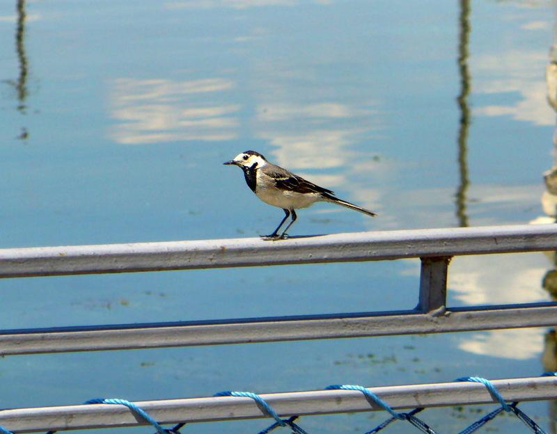 Вежливая птичка