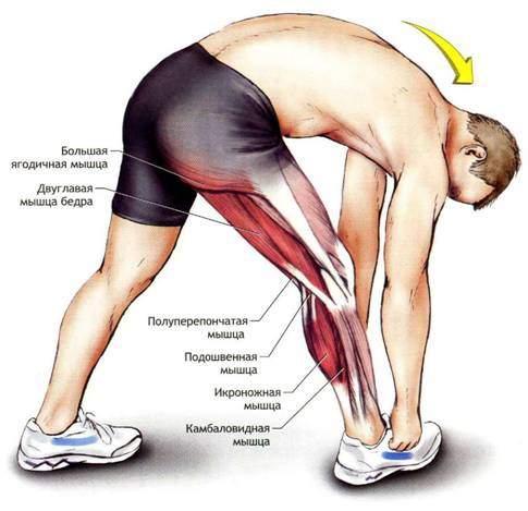 как увеличить гибкость коленного сустава