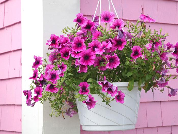 Фото цветов петуньи и других цветов