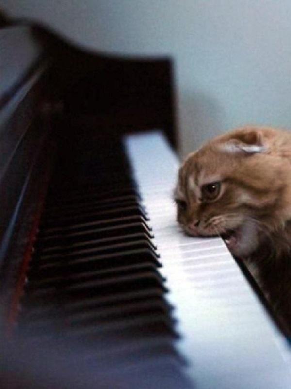 25 самых улетных снимков котов. Это точно поднимет вам настроение!