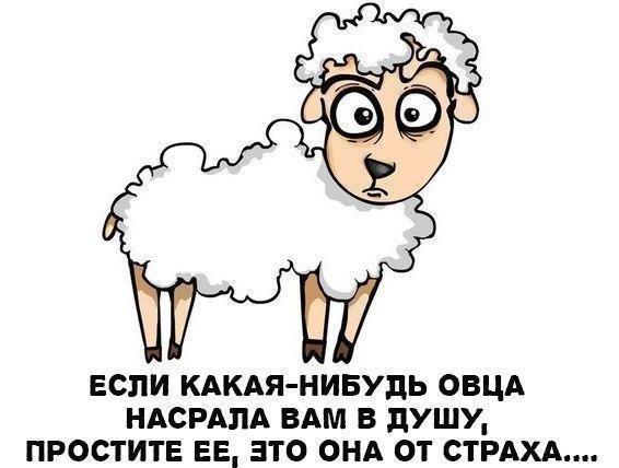 http://mtdata.ru/u24/photo19DA/20840208727-0/original.jpg#20840208727