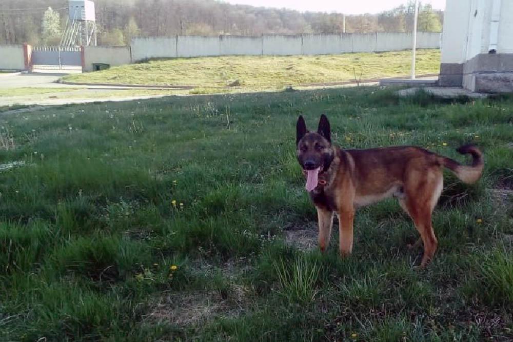 Военные объекты в Волгоградской области охраняют с помощью собак