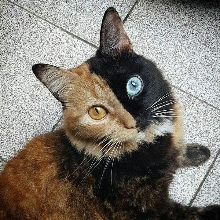 Невероятный кот!