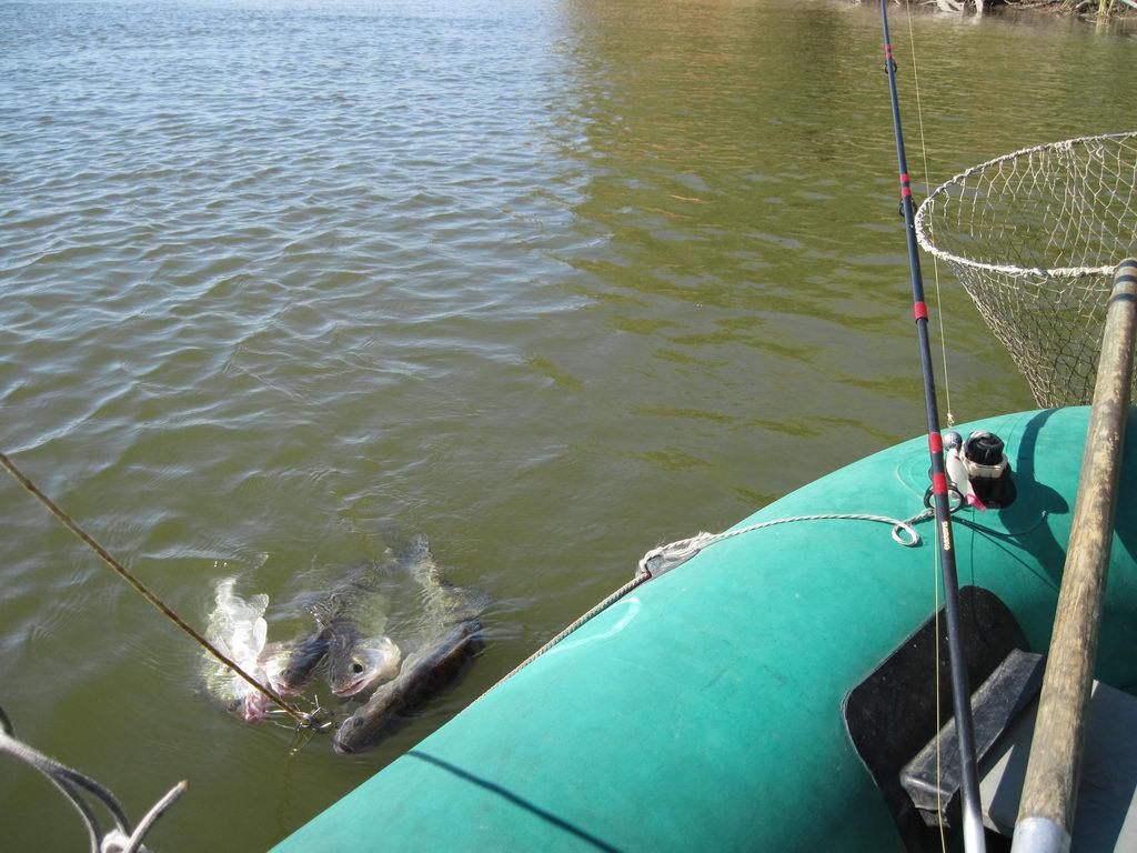 рыбачим на судака с лодки