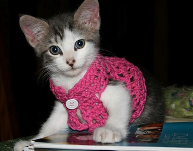 Малыш в дерзком розовом цвете кардиган, кот