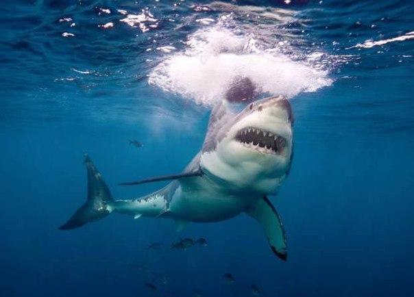 Акула напала на этого мужчину, а в итоге спасла ему жизнь