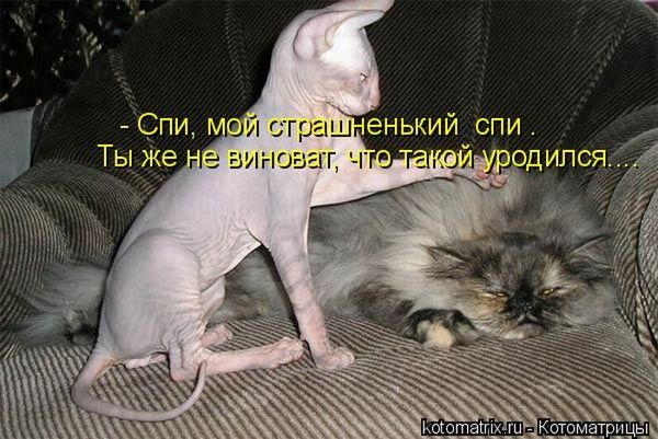 Если вы слишком много работаете - заведите кота. Силой личного примера он перетянет вас на сторону истинных ценностей: отдыха и ленивого созерцания (котоматрицы)