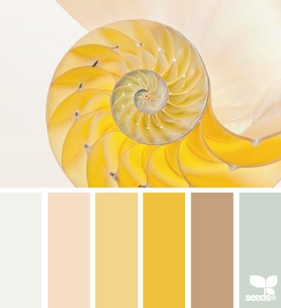 Nautilus желтые
