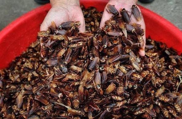 Тайская школьница придумала гениальный способ борьбы с тараканами(1 фото)