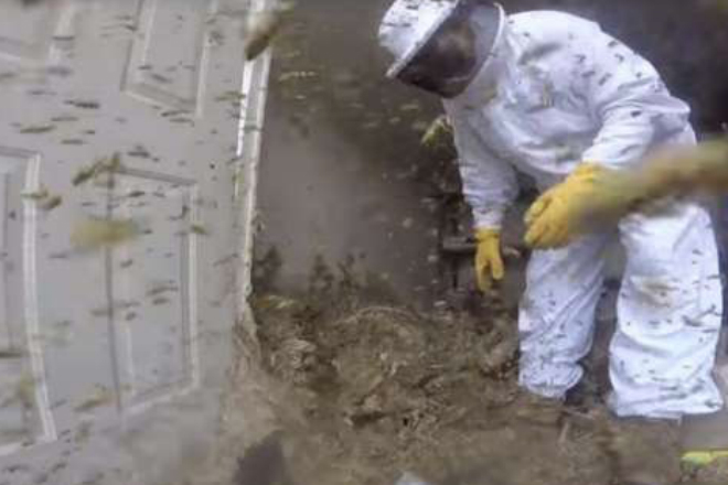 Пчеловод решил уничтожить огромное гнездо шершней. Он и не ожидал такого!