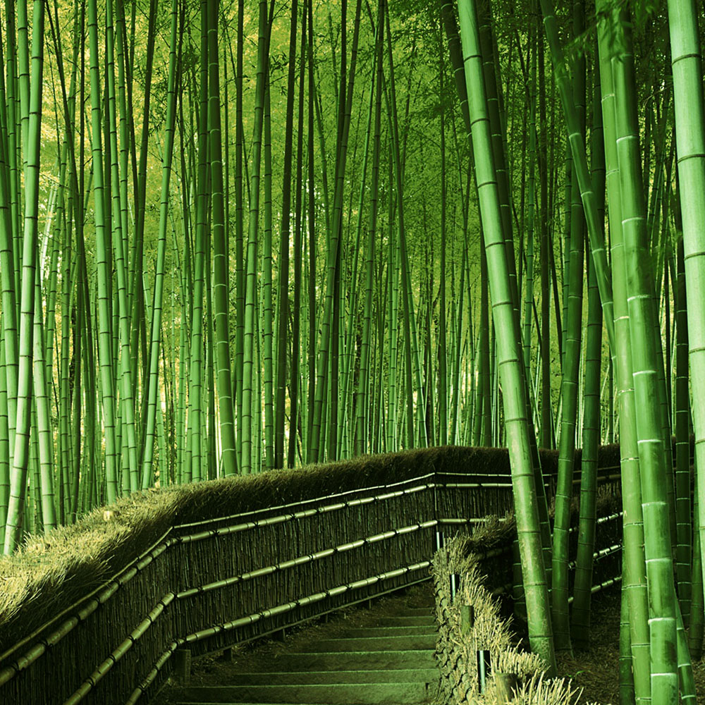 Одежда из бамбука - что это?