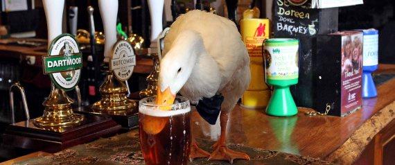 Заходит как-то раз утка в галстуке-бабочке в бар….