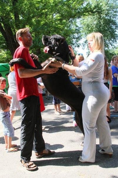 Жизнь с собакой: Собачий Аполлон