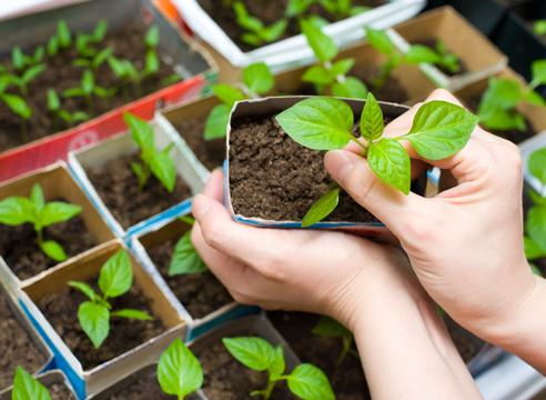 Время сеять семена Green market
