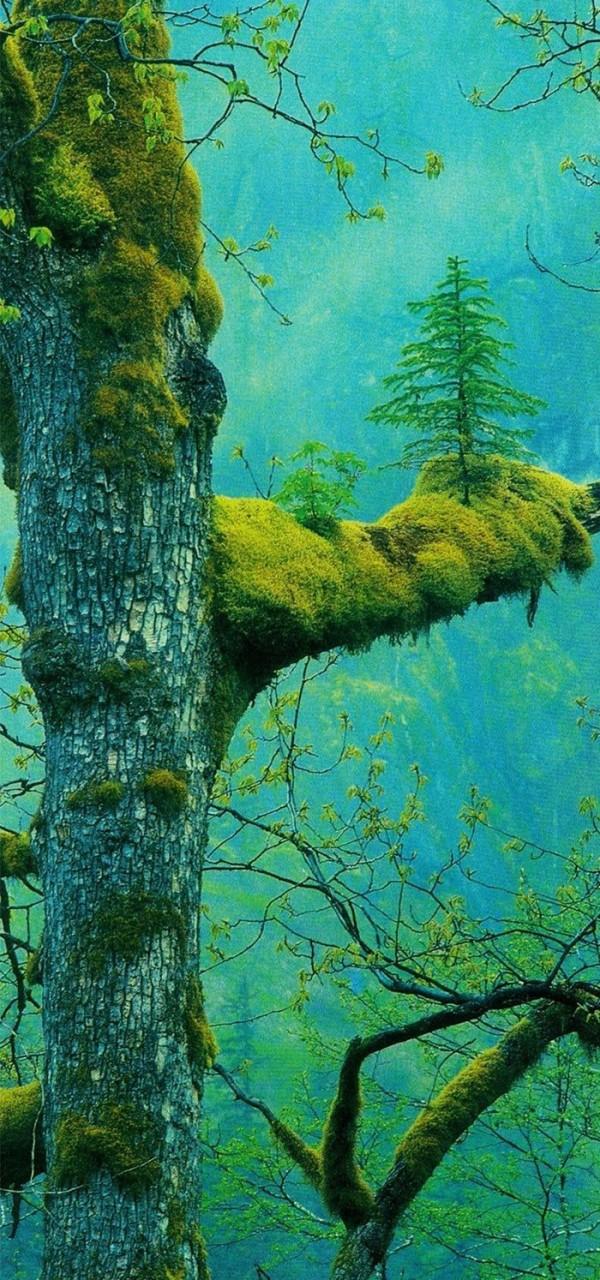 Дерево на дереве дерево, живучесть, жизнь, мир, планета, растительность, фото