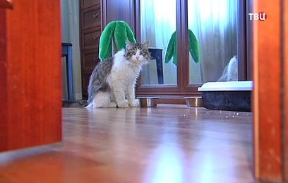 Спасенный на МКАД кот ищет новый дом