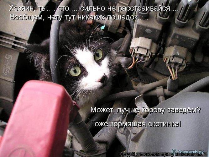 Юморная котоматрица 9