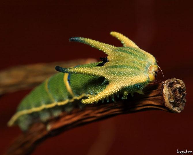 Удивительное превращение гусениц в бабочек