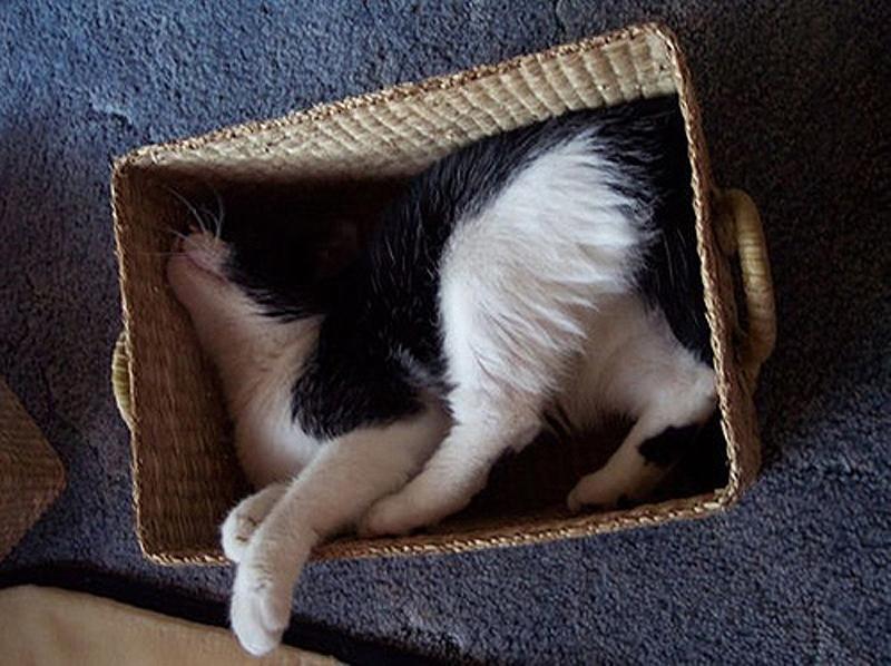 cats 10 25 кошачьих поз для сна