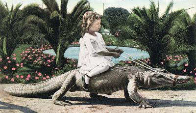 Парк ручных аллигаторов как …
