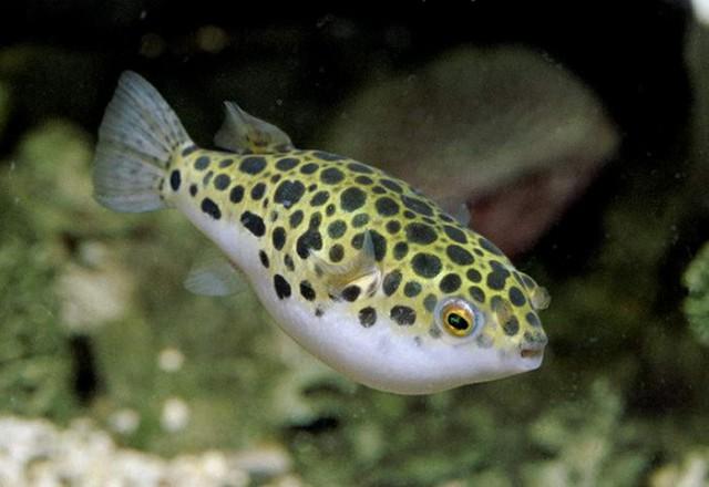 Аквариумные рыбы, как выбрать новичкам