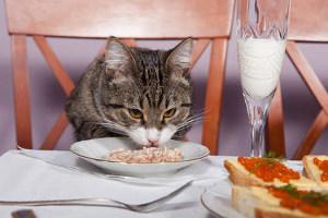 КОШКИН ДОМ. Вредная еда для кошек