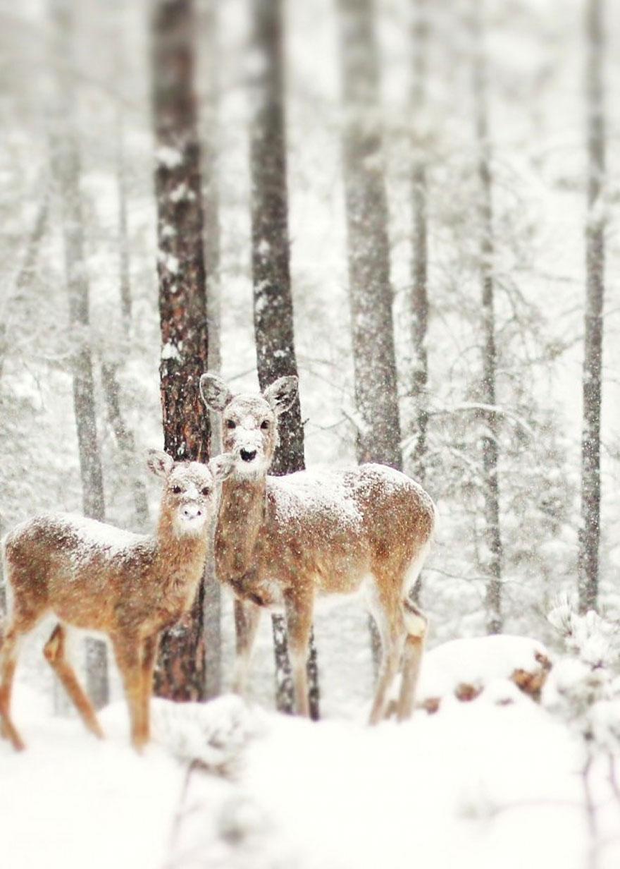 Зима + зверушки = красота