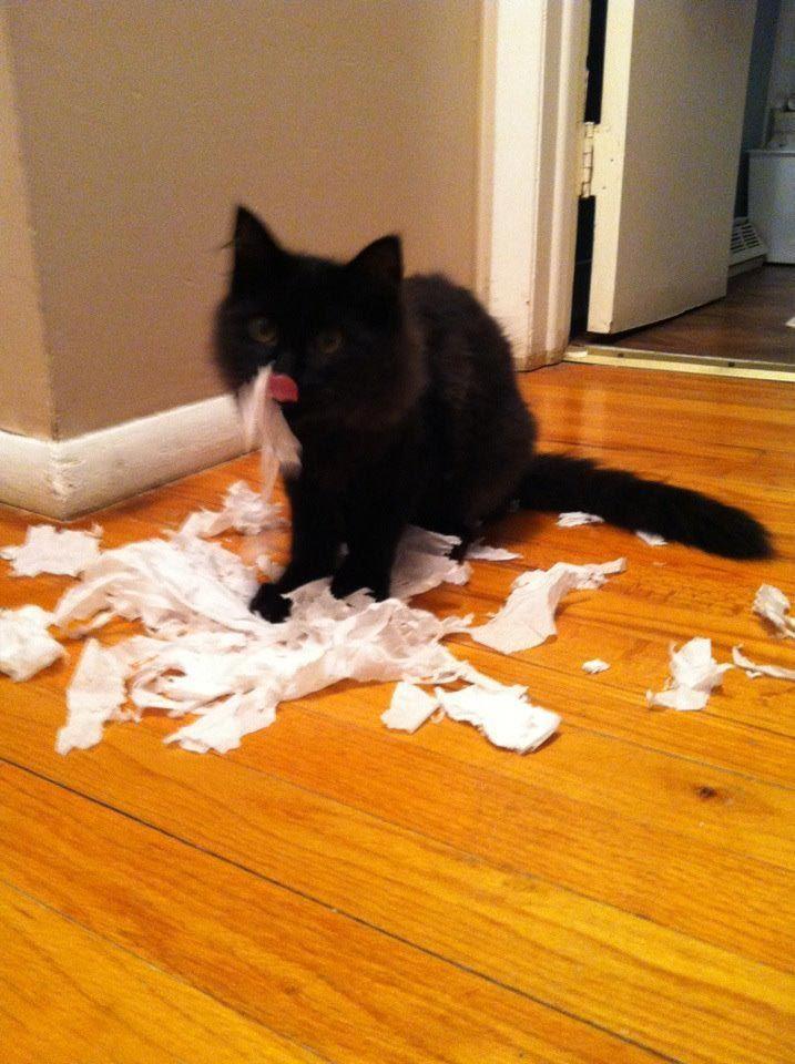 13 котов-хулиганов, пойманных на месте преступления